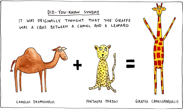 Camels and leopards