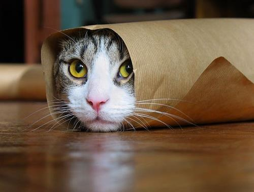 Wrapped Kitty