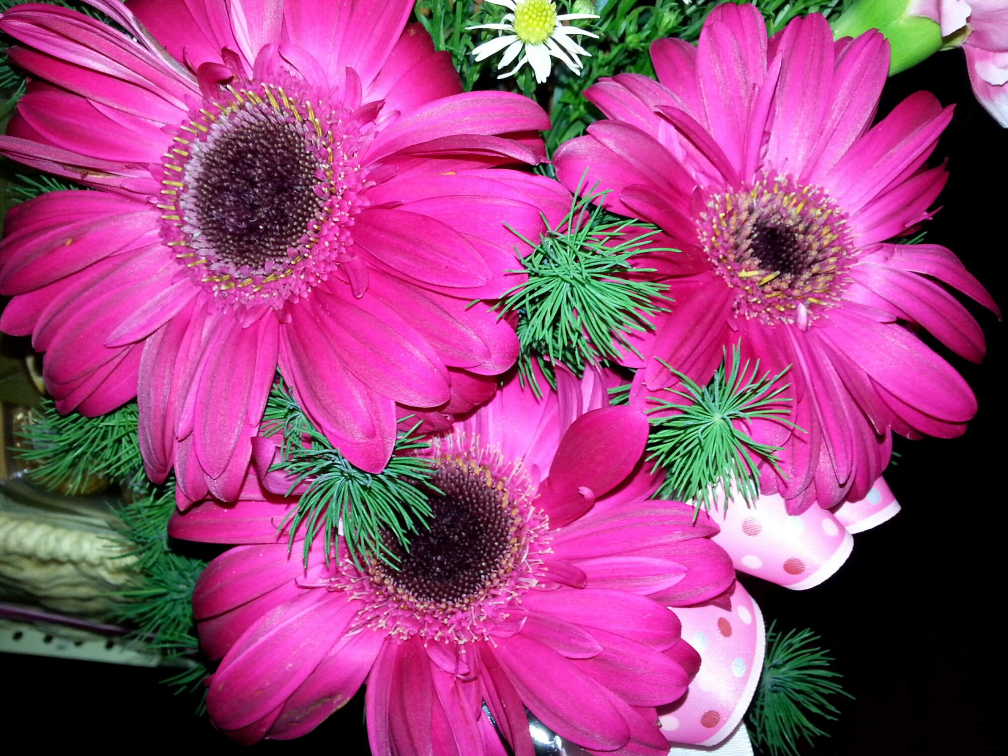 Beautiful and rare pink sunflowers chua hc image mightylinksfo